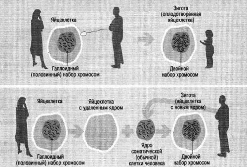 Схема рождения человека обычным путем (вверху) и путем клонирования (внизу)